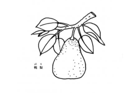 两张鸭梨的简笔画图片