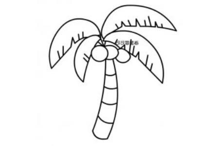如何画高大的椰子树简笔画图片