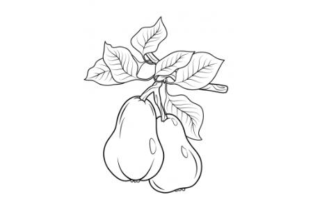 我喜欢的水果-梨