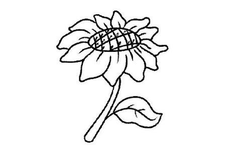 儿童简笔画向日葵卡通图片
