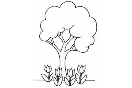 大树和郁金香简笔画