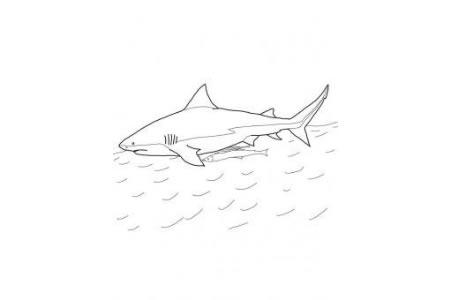 牛鲨简笔画图片