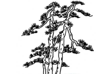 一品松树简笔画图片