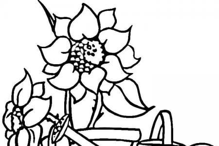 喷壶和向日葵