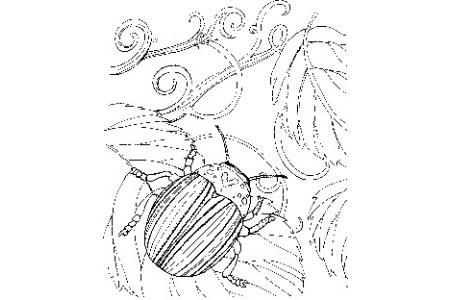 日本金龟子