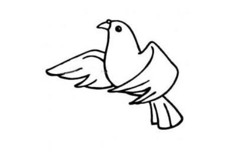 飞翔的和平鸽简笔画