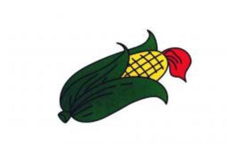 简笔画玉米
