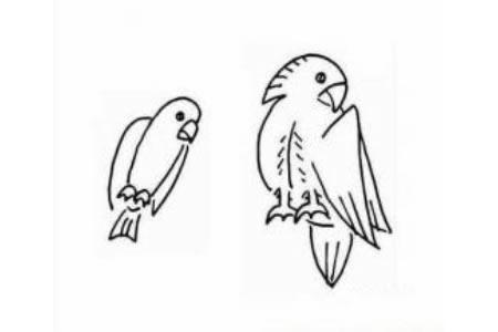 鹦鹉的简笔画大全