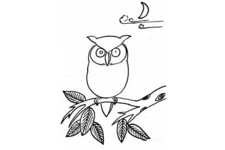 猫头鹰简笔画图片