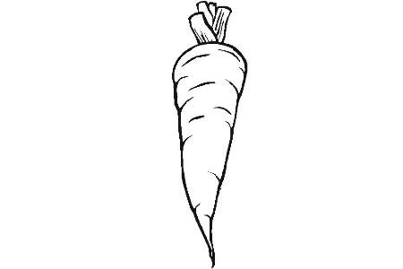 胡萝卜简笔画图片