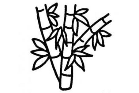 竹子树简笔画画法