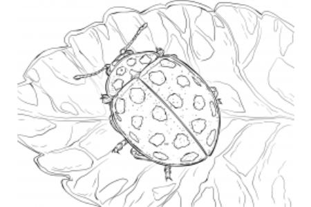 花朵上的瓢虫