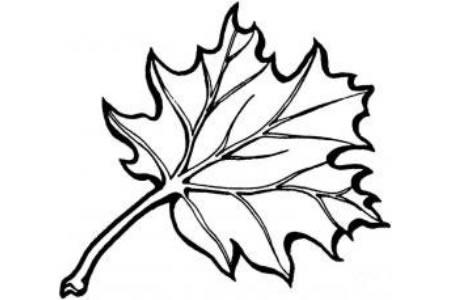 橡树树叶的画法