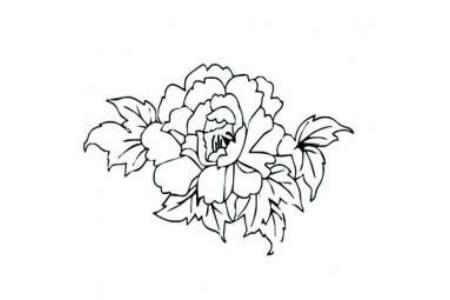 花朵简笔画 关于牡丹花的简笔画图片