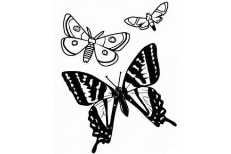 漂亮蝴蝶简笔画图片