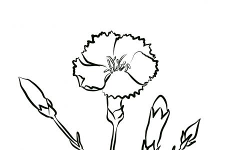 一枝康乃馨