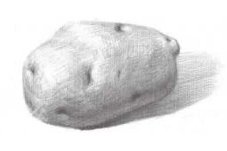 素描土豆的绘画技法