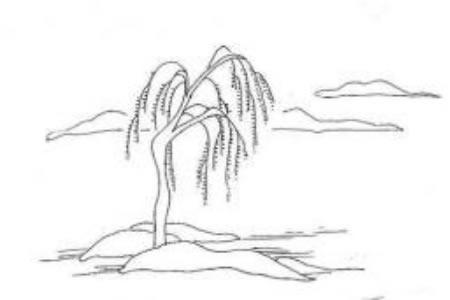 大树的简笔画方法介绍