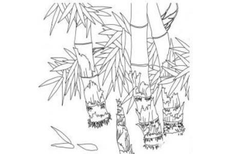 竹子简笔画