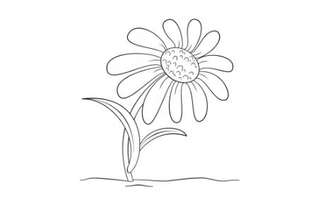 幼儿菊花简笔画画法
