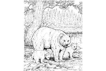 黑熊妈妈和宝宝