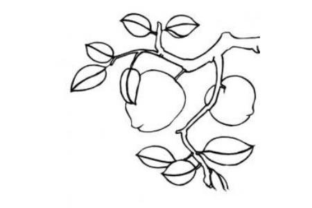 关于桃树树干简笔画