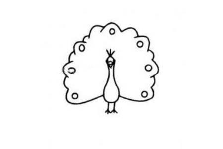 幼儿孔雀开屏简笔画