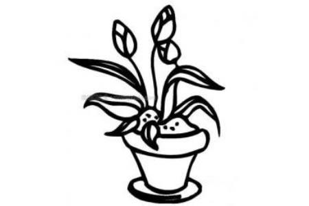花盆里的花简笔画