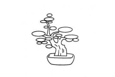 小树盆景简笔画