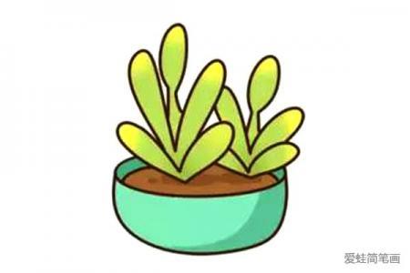 漂亮的多肉植物简笔画5