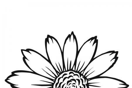 简单的向日葵花瓣