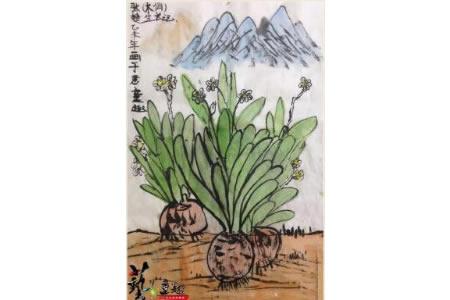 水仙花写意图片