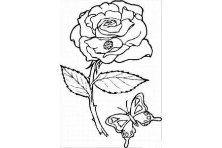 花朵图片 玫瑰花简笔画