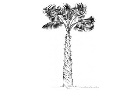 棕榈树的画法