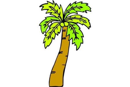 颜色绚丽椰子树卡通简笔画