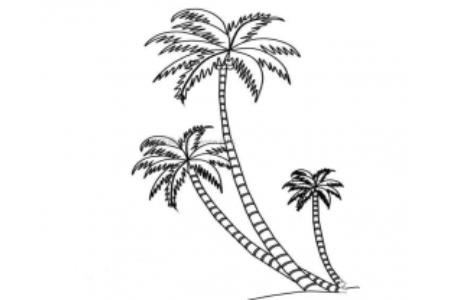 椰树简笔画图片