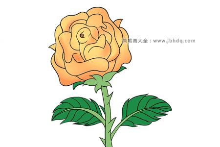 漂亮的黄玫瑰简笔画图片