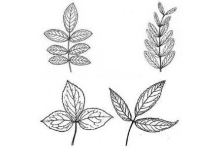 四种不同的树叶简笔画