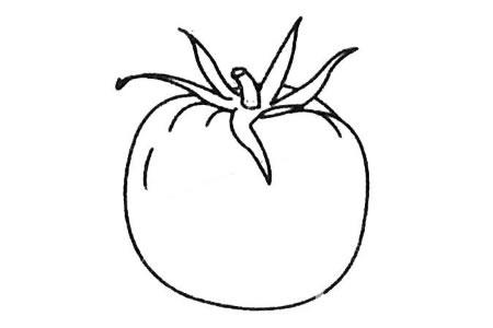 西红柿简笔画大全及画法步骤