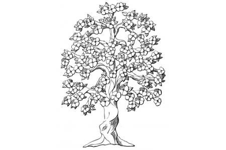 开花的苹果树怎么画