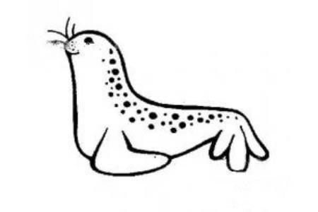 海豹简笔画图片