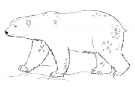 如何画北极熊