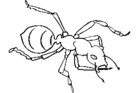 蚂蚁简笔画
