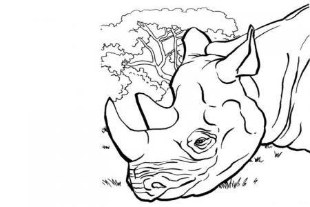 功夫熊猫中的爪哇犀牛