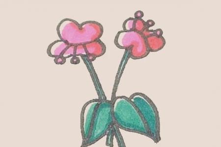简笔画之蝴蝶兰
