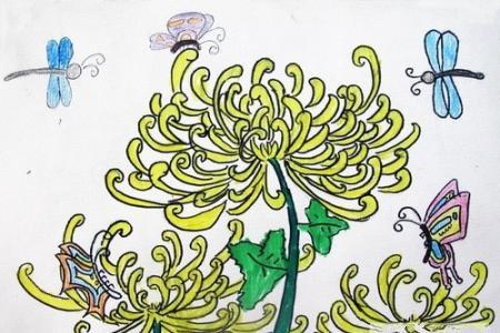 关于重阳节的儿童画-菊花蝴蝶