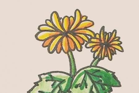 简笔画之菊花