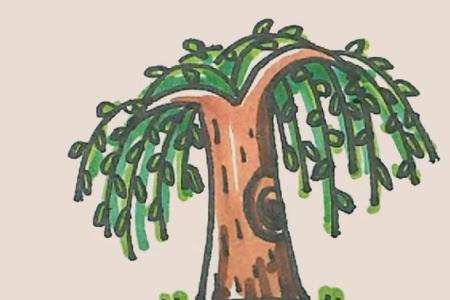 简笔画之柳树