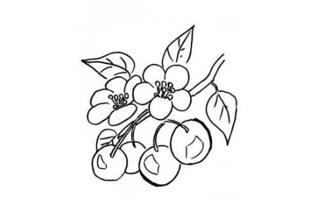 樱桃和樱花