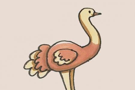 简笔画之鸵鸟